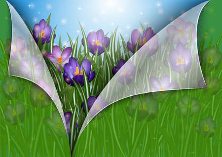 Illustration of border from purple crocus flowers and paper with curled corners