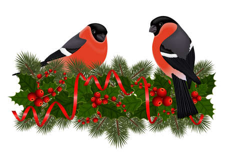 Illustration of bullfinch birds on fir tree, holly berry branches with streamers isolated