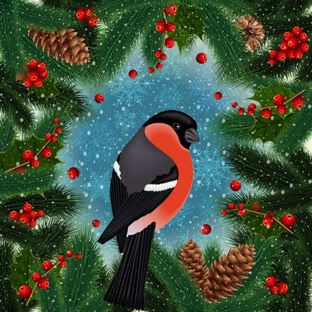 Illustration of bullfinch bird on fir tree, holly berry branches with cones and snowflake background Illustration