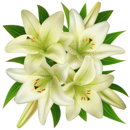 Illustration of bouquet from white lily flowers isolated