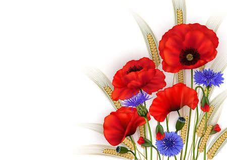 Illustration of template for wedding, greeting or invitation card with poppy flowers, cornflowers and wheat ears isolated