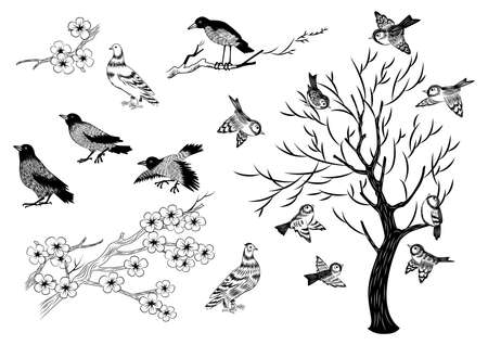 Illustration of hand drawn magpies, sparrows, pigeons and trees isolated 矢量图像