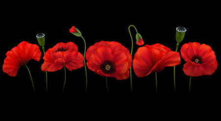 Illustration of template for greeting or invitation card with poppy flowers on black background Stock Illustratie