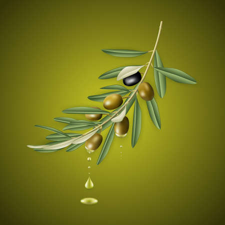 Illustration of realistic olive tree branch with olive oil drops