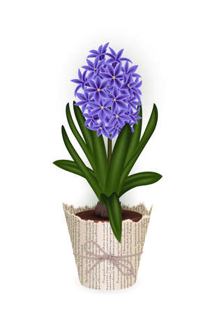 Illustration of hyacinth flower in flowerpot with newspaper wrapping and rope bow isolated