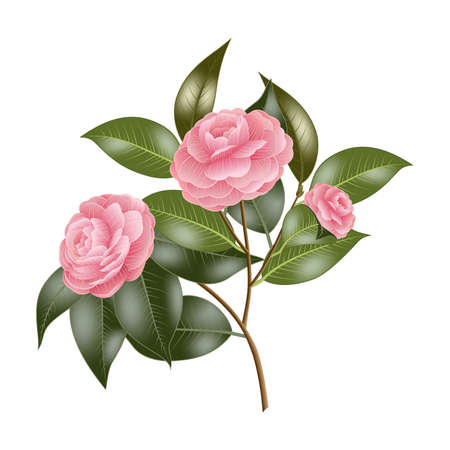Illustration of branch with pink roses isolated