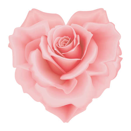 petal: Isolated beautiful pink rose-heart on the white background