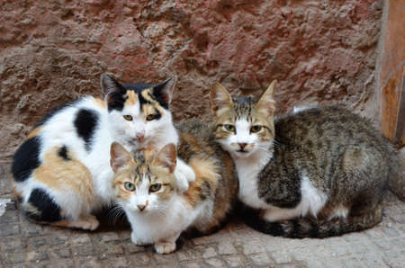 Cats in the streets of the medina of Marrakech. Morocco