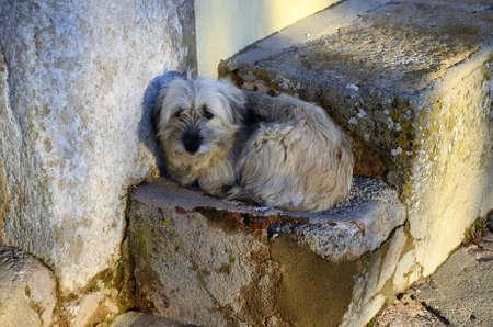 Perros de jaula abandonados bloqueados, tristeza Foto de archivo