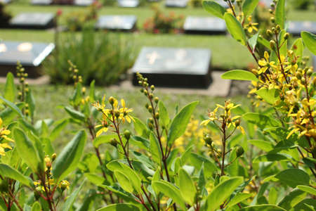 Cemetery flowers in the graveyard with gravestone