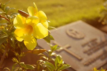 墓石のある墓地の墓地の花