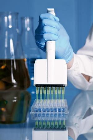 pipeta: Escena en la que un técnico está depositando muestras en un panel con una pipeta multicanal Foto de archivo