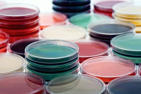 bacteriology: petri dishes with culture medium Stock Photo
