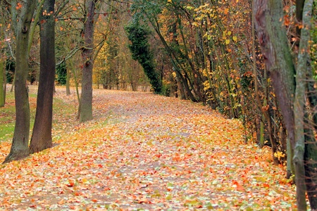 A road littered with autumn leaves photo