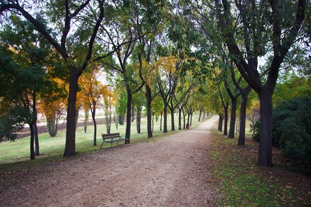 a walk in the park on a fall day photo