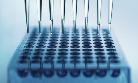 pipeta: pipetas de dispensaci�n de muestras en una placa de pozo profundo Foto de archivo
