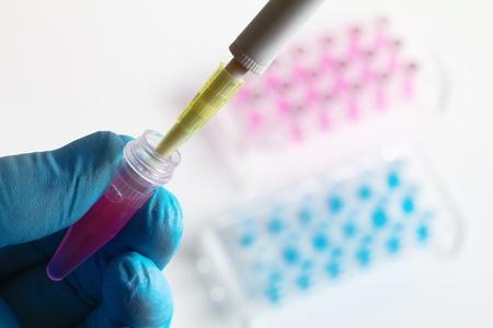 pipeta: científico s trabajo mediante la colocación de una muestra genética en un tubo
