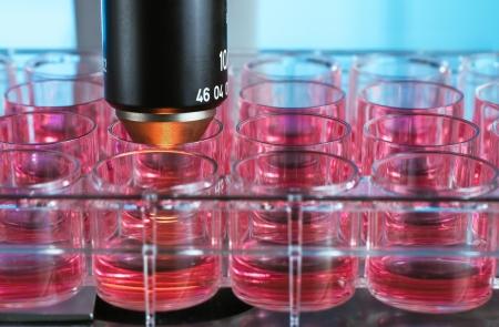 tubos fluorescentes: placa de cultivo de células en el microscopio