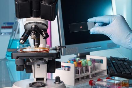 laboratorio clinico: científico en el banco de trabajo de laboratorio, examen de una placa de Petri