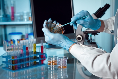 microbiology: Un cient�fico que sostiene una placa de Petri en el laboratorio con un monitor y un microscopio en el fondo
