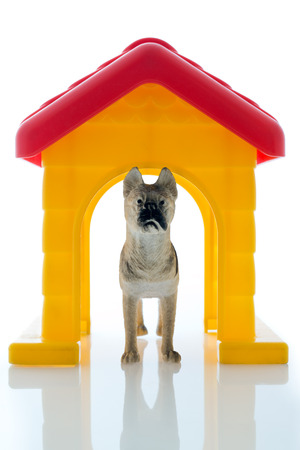 guard dog: scene of a toy guard dog watching your house isolated in background white Stock Photo