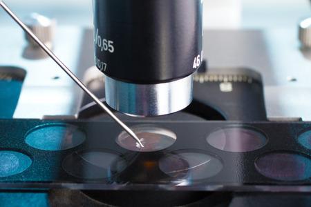 technicus het deponeren monster op een dia voor microscopisch onderzoek in het laboratorium Stockfoto
