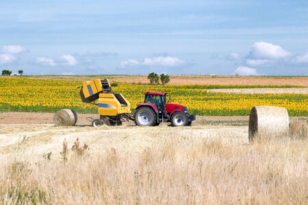 tractor baler rolling forage of some cereals in a crop field with sunflowers in the background photo