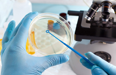 microbiologist hand cultivating a petri dish whit inoculation loops, beside a microscope and at background tubes and tools of laboratory / lab technician hand planting a petri dish Foto de archivo