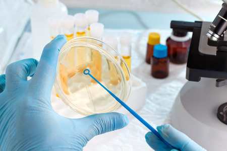 microbiologist hand cultivating a petri dish whit inoculation loops, beside a microscope and at background tubes and tools of laboratory / lab technician hand planting a petri dish 写真素材