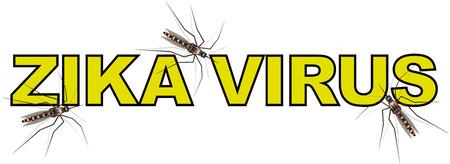 anopheles: text with word Zika virus  Zika virus text