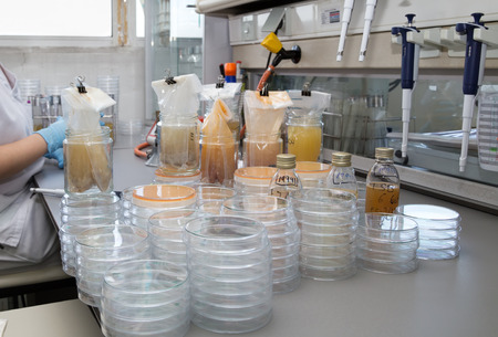 quality control inspection of food samples in the lab / analysis of food quality control in the laboratory