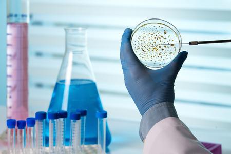tomar una muestra de una placa de Petri / técnico que sostiene una placa de Petri en el laboratorio biológico