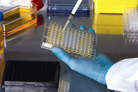Wissenschaftler arbeiten mit Zellkulturen unter sterilen Schrank / Techniker im Labor Pipettieren Proben arbeiten in Mikrotiterplatten mehrkanaligen in der sterilen Haube