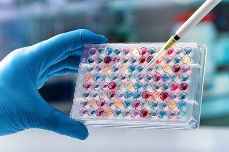 Ricercatore in possesso di una piastra a 96 pozzetti con campioni per l'analisi biologica/micropiastra in mano dello scienziato per la ricerca biomedica