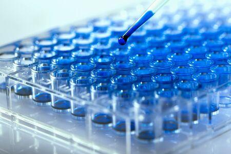 Scientifique tenant une plaque à 96 puits avec des échantillons pour analyse biologique / Chercheur pipetant des échantillons de liquides dans une microplaque pour la recherche biomédicale Banque d'images