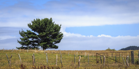 Landscape with a fence and a tree in the flowery meadows of Chiloe, Chile Banque d'images - 100616870