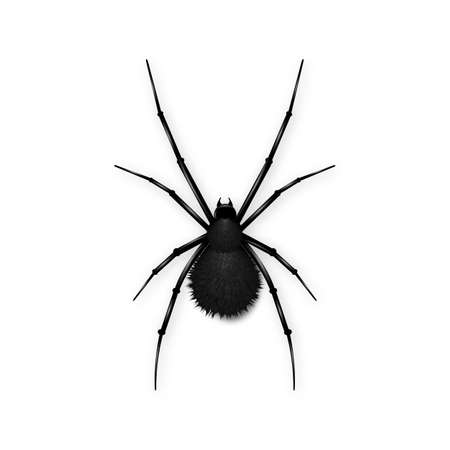 poison sign: Black spider with fluffy ass isolated on white background.