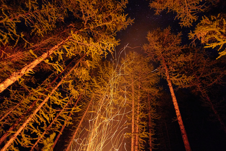 Sparks from a bonfire night in the woods flying in the sky. Fire in the woods under a starry sky, the trees illuminated by the light from the fire, the tourists night wiring the fire