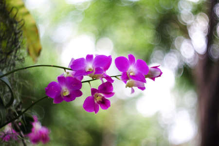 Beautiful purple orchid on the background bokeh