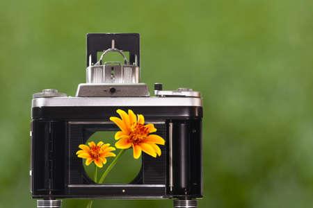 folding camera: Beautiful flowers to look through the camera shutter