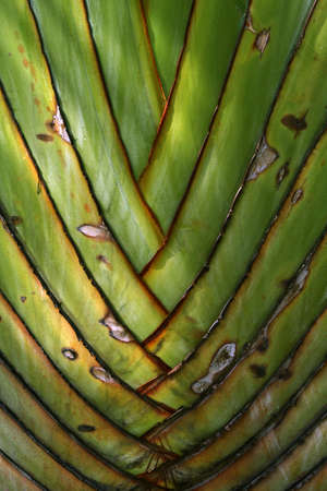 texture and pattern detail banana fan photo