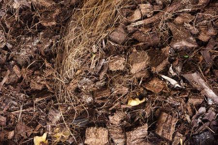 dead leaves: hojas o plantas muertas Foto de archivo