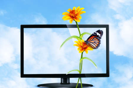 Butterfly and flower on Television photo
