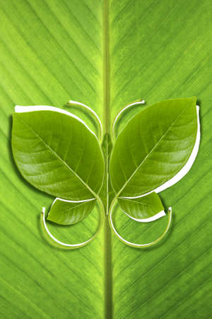 Butterfly leaves eco friendly on banana leaf background