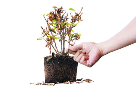 sapless: Hand and Tree withered Stock Photo