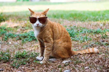Cat and glasses Stock Photo
