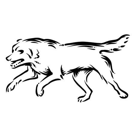 fetch: dog