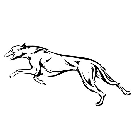 canid: dog
