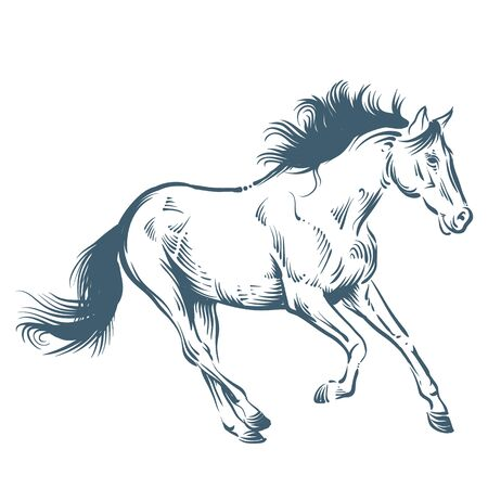 strut: horse