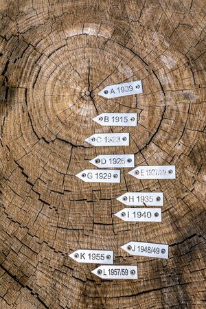 Section of secular tree trunk with labels with year. Seen from above. Iron labels.